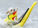 Doggies surf for love