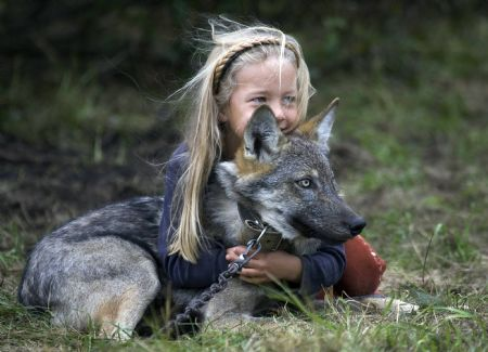 A girl plays with a tame wolf in the village of Nadbiarezha, some 250 km (156 miles) northwest of Minsk, September 23, 2009.(