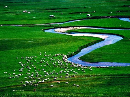 Established in 1985, Xilinguole National Natural Reserve in the Inner Mongolia Autonomous Region is China's first grassland national reserve that covers a total area of 10,786 square kilometers. It also joined the UNESCO Man and Biosphere Reserve Programme in 1987. [Global times]