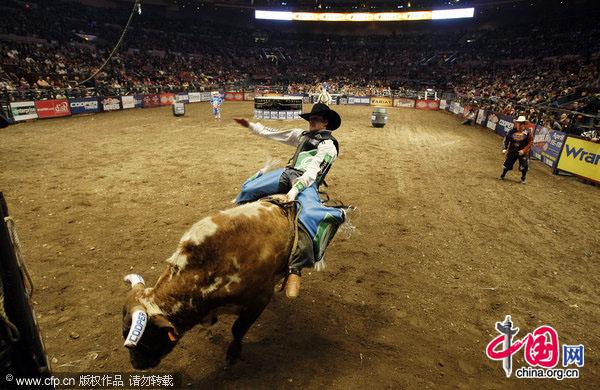 Professional Bull Riders Championship In Ny