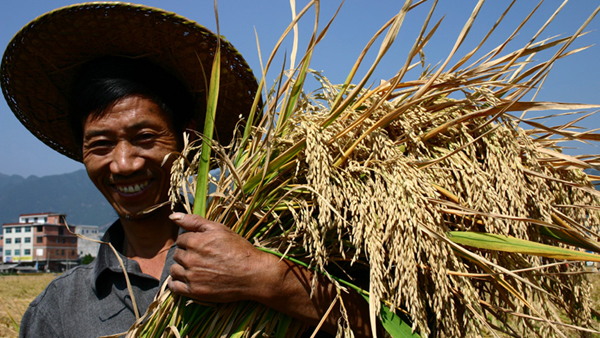 "A farmer smiles after a good harvest of the high-yielding ""super rice"" in Tiantai, Zhejiang province.[China Daily]"
