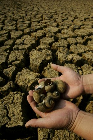 Dead field snails are seen at a dried-up reservoir in Caoba Town of Mengzi County, southwest China's Yunnan province, March 1, 2010. Continual drought has hit the county of Honghe Hani and Yi Autonomous Prefecture, since September 2009, resulting in serious water shortage. [Xinhua]