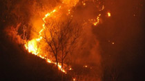 Forest fire burns in south China