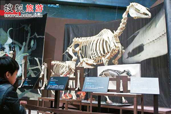 A boy looks at a model of a dinosaur at