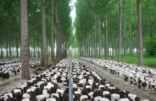 Shandong natural resources - China.org.cn