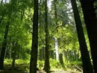 Forests help combat climate change