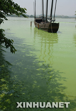 A file photo of Taihu Lake hit by devastating attack of algae in May 2007.