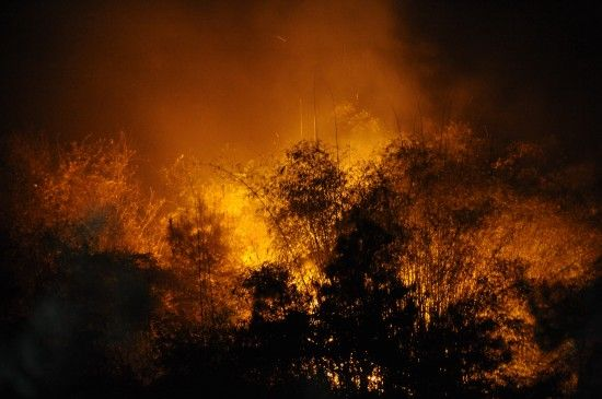 About 2,000 policemen and firefighters were mobilized Sunday to tame a fire which ravaged at least 20 hectares of forest in southwest China's Chongqing Municipality. The fire broke out at about 2:30 p.m. in Dadukou District and was continuing as of 10 p.m. No casualties have been reported. Residents near the fire have been evacuated. The cause of the fire is being investigated, officials said. [Xinhua]