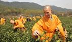 Monks collect tea in Hangzhou