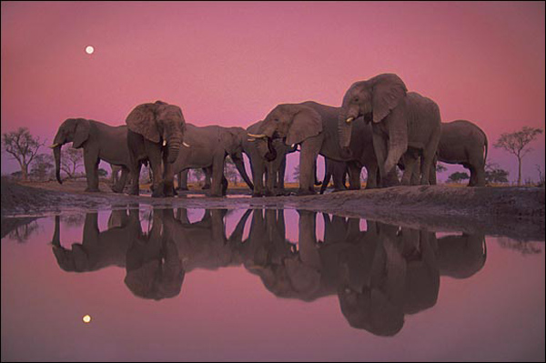 'Twilight of the Giants' by Frans Lanting, 1986