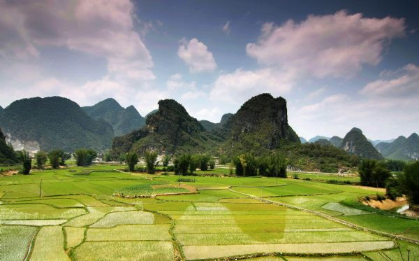 Photo taken on April 24, 2010 shows the pastoral scenery in Jiangping Village in Wuzhuan Township of Donglan County in Hechi City, southwest China's Guangxi Zhuang Autonomous Region. Most areas of the Hechi City met the rainy weather in the late April as they have been in serious drought for months before. [Xinhua]