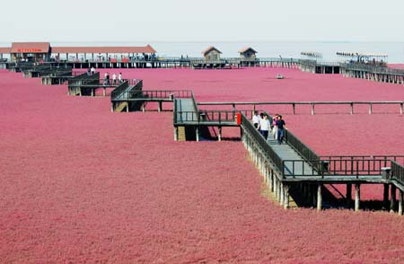 Best Time To Visit Red Beach Panjin China