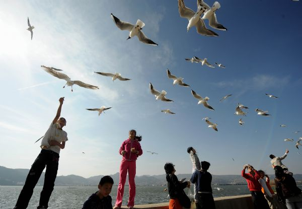 Gulls fly at the Dianchi Lake in Kunming, capital of southwest China's Yunnan Province, Feb, 16, 2010. June 5 is the World Environment Day. [Xinhua]