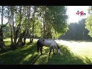 Breakfast in Silver birch forest [Photo by Li Shen]