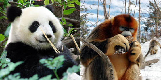Top 10 most endangered animals in China