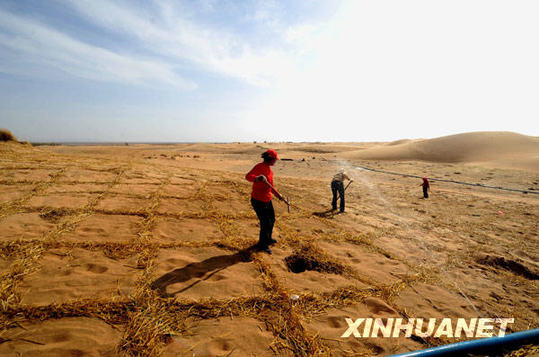 People are planting trees and grass to prevents the desert from expanding. [Xinhua File photo]
