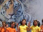 Protecting tigers priority in China