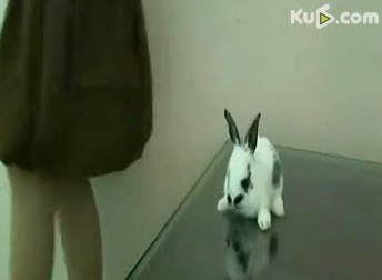 Dog Chinaorgcn Rabbit Abuse Video Highlights Animal Rights Issue Chinaorgcn