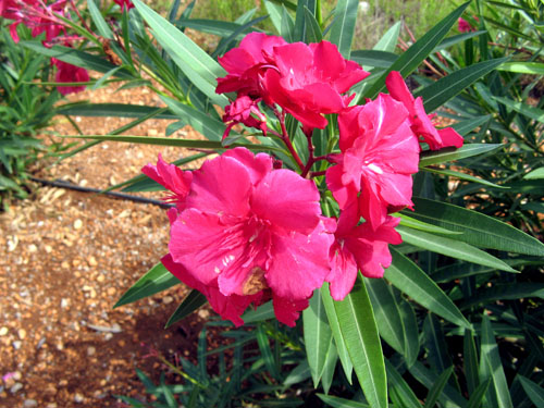 Top 10 poisonous plants