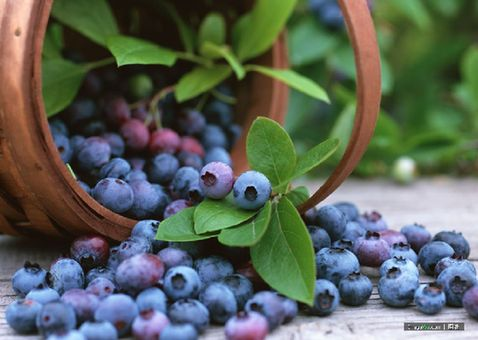 Eating purple-colored fruit can ward off age-related diseases such as Alzheimer's, heart problems and cancer, scientists believe.