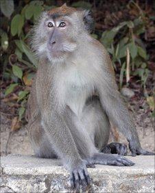 A study suggests that our more primitive primate relatives are capable of self-awareness.