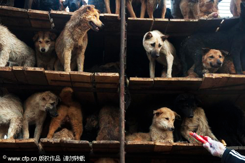 The dogs are scared and reluctant to get off the truck at a care center of the China Small Animal Protection Association in Beijing, April 16, 2011.
