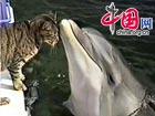 Adorable: Cat and dolphin play together