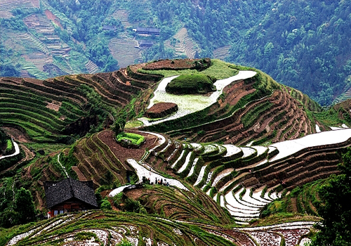 Longji Terrace, one of the 'Top 8 May destinations in China' by China.org.cn