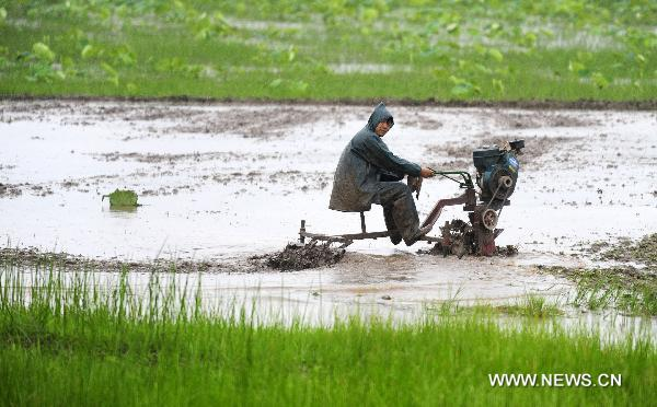 A farmer ploughs the field in the rain in Jianli County, central China's Hubei Province, May 31, 2011. The rain eased the drought in Hubei Province while farmers seized the time to transplant rice. [Xinhua]