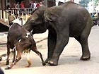 2 elephants go on rampage, killing at least 1 person