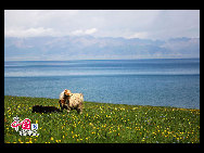 Sayram in Kazak means 'blessing'. Sayram Lake, also called 'Santai Haizi', with its crystal clear water reflecting the snow-capped mountains, is a gem studded among the unfolding Tianshan Mountains. The largest and highest alpine lake in Xinjiang, Sayram Lake nurtures various species of fish, livestock and birds, amongst other wild animals. It is said to be a once in a lifetime experience to take a stroll along the lakeside by foot or on horseback.