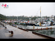 The fishing boats stationed in the harbour to avoid the Typhoon Meari which hit the island on June 25 this year. [François Chen / China.org.cn]