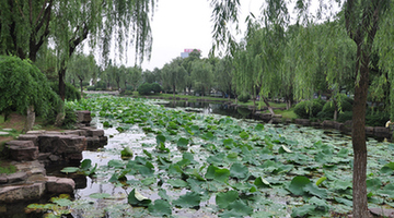 Moon Lake in Wuhan 