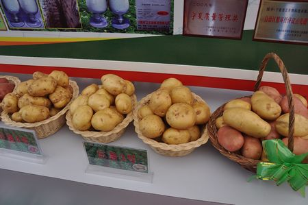 Ningxia seeks advice on potato industry