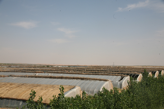 Desert control profitable in Zhongwei City