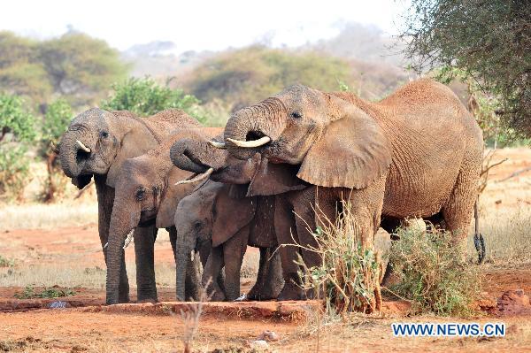 Extinct chinese elephant