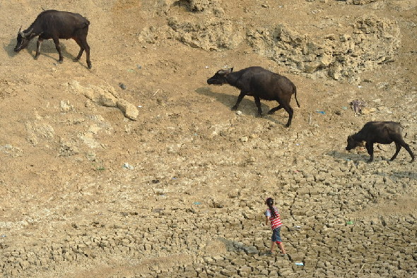 A girl walks on a drought water reservoir in Qianxi County, southwest China's Guizhou Province, July 28, 2011. Serious drought hit Guizhou in July. [Xinhua]