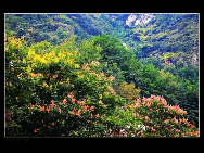 Cuihua Mountain National Geopark, located some 20 kilometers away from Xi'an, is park of the Qin Mountain Range. Formed of an array of metamorphic rocks from the Middle Geological Epoch, it is said that this mountain was raised because of an earthquake in the three valleys in mid-Shaanxi in the second year of King You of Western Zhou's reign.[西部老马/bbs.fengniao]