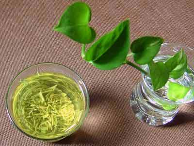 File photo: Green tea