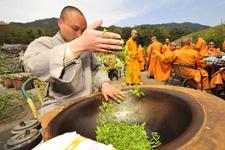 Monks busy picking Fajing zen tea