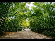 When you enter the bamboo sea in Southern Sichuan Province, you are surrounded by a green and luxuriant bamboo world. You can see 58 different kinds of bamboo. Once stepping into the sea of bamboo, you may feel a sense of tranquility. [冰城发烧/bbs.fengniao]
