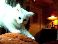 Cat diaries - The first ever movie filmed by cats