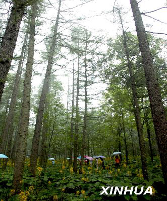 Anhui has completed four of the five World Bank-supported tree planting projects it has implemented in more than 35 counties.