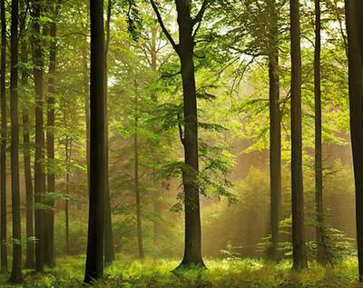 WB provides 640 mln yuan in loans for forestation