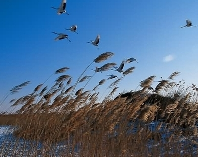 NE China fights illegal wetland cultivation