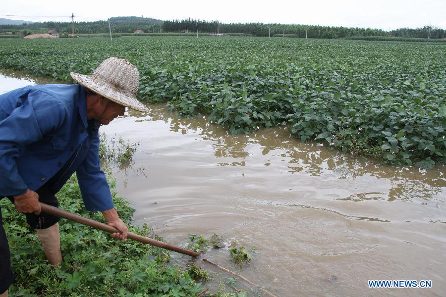 A farmer is seen in flooded farmland in Zhangzhuang Township of Linyi, east China's Shandong Province, Aug. 29, 2011. Heavy rainfall hit southern part of the province recently. About 2,000 residents and 53,333 hectares of farmland were affected by the rain-triggered flood. [Xinhua]