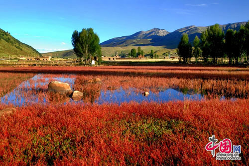 Daocheng, one of the 'Top 8 October destinations in China' by China.org.cn.