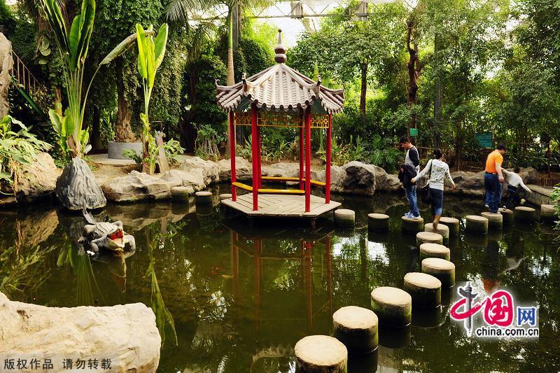 Resultado de imagem para Tianjin Tropical Botanical Garden