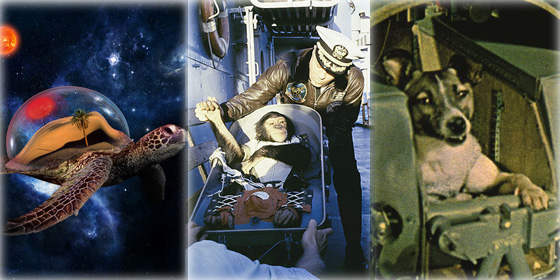 Top 10 animal astronauts in space