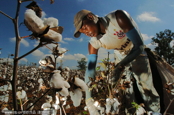 ing to africa for an alternative source of cotton -